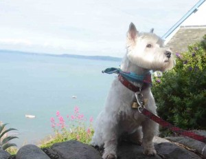 Daisy posing above Clovelly harbour.