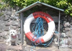 Daisy at Porlock Weir.