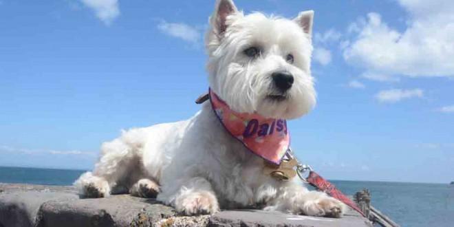 Daisy posing at Porlock Weir.