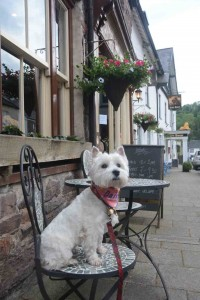 Daisy outside Woods Restaurant in Dulverton.