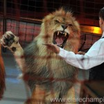 Ban animal circuses from public land plea