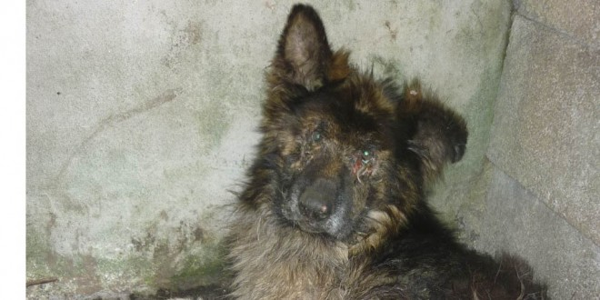 Dog left to die over six weeks in West Clare