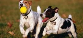 ISPCA street protest over dog pound