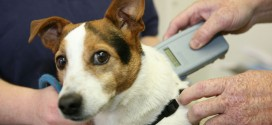 Compulsory microchipping of dogs