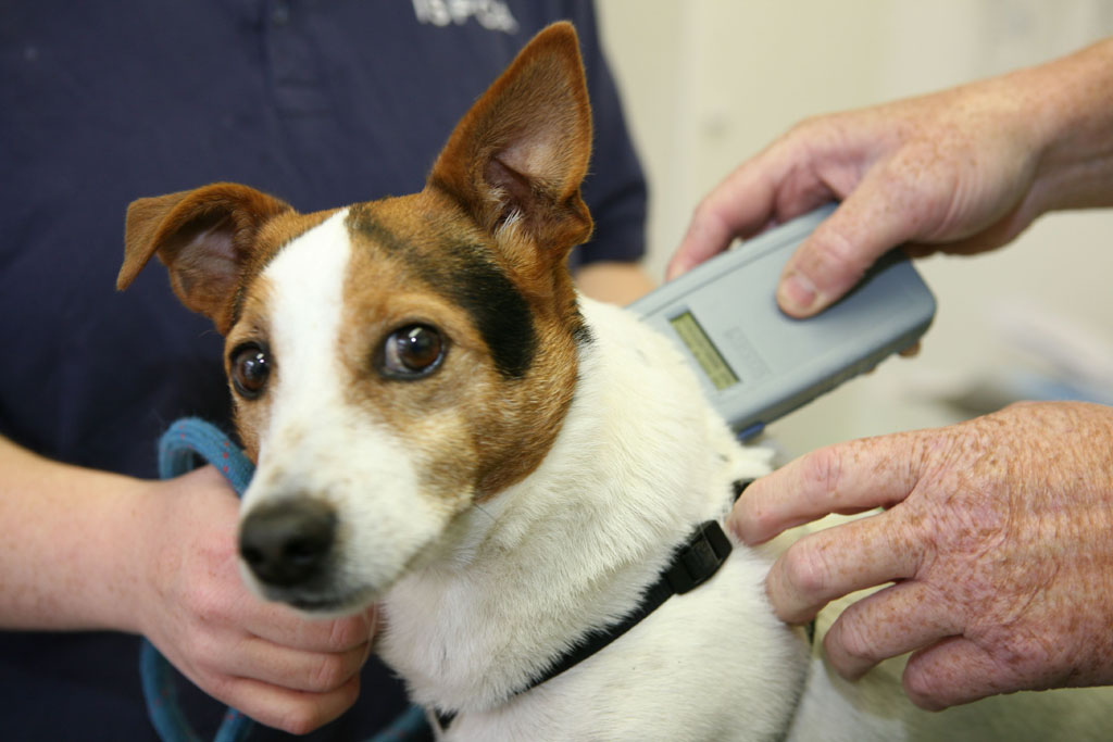 Getting Your Dog Chipped