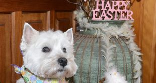 Happy Easter from Daisy