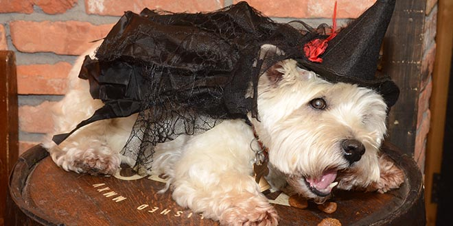 Daisy getting into Hallowe'en mode as Hairy Potter.