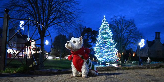 Night falls in Bourton-on-the-Water with the Christmas tree in the background.