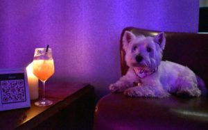 Even though the Westie wasn't allowed into the West Restaurant, I was allowed to sample (or at least gaze at) a cocktail in the ballroom.